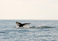 Whale Watch June 2017